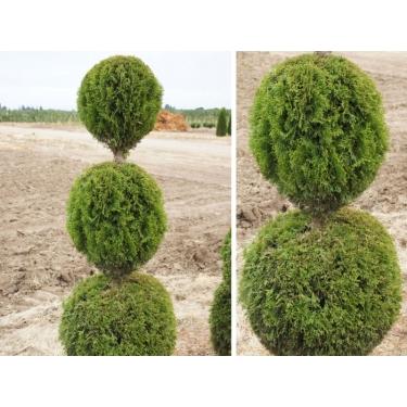 Internetowy Sklep Ogrodniczy Sadzonki Roślin Sprzedaż